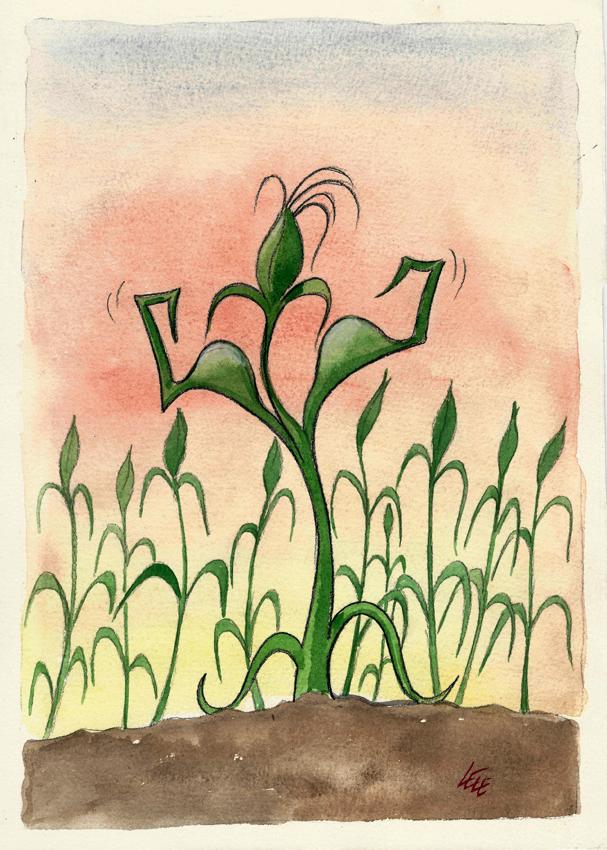 39. Geni rinforzati (OGM)